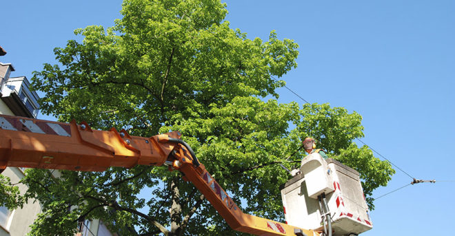 Tree Cutting Services: Tips To Consider When Cutting A Tree